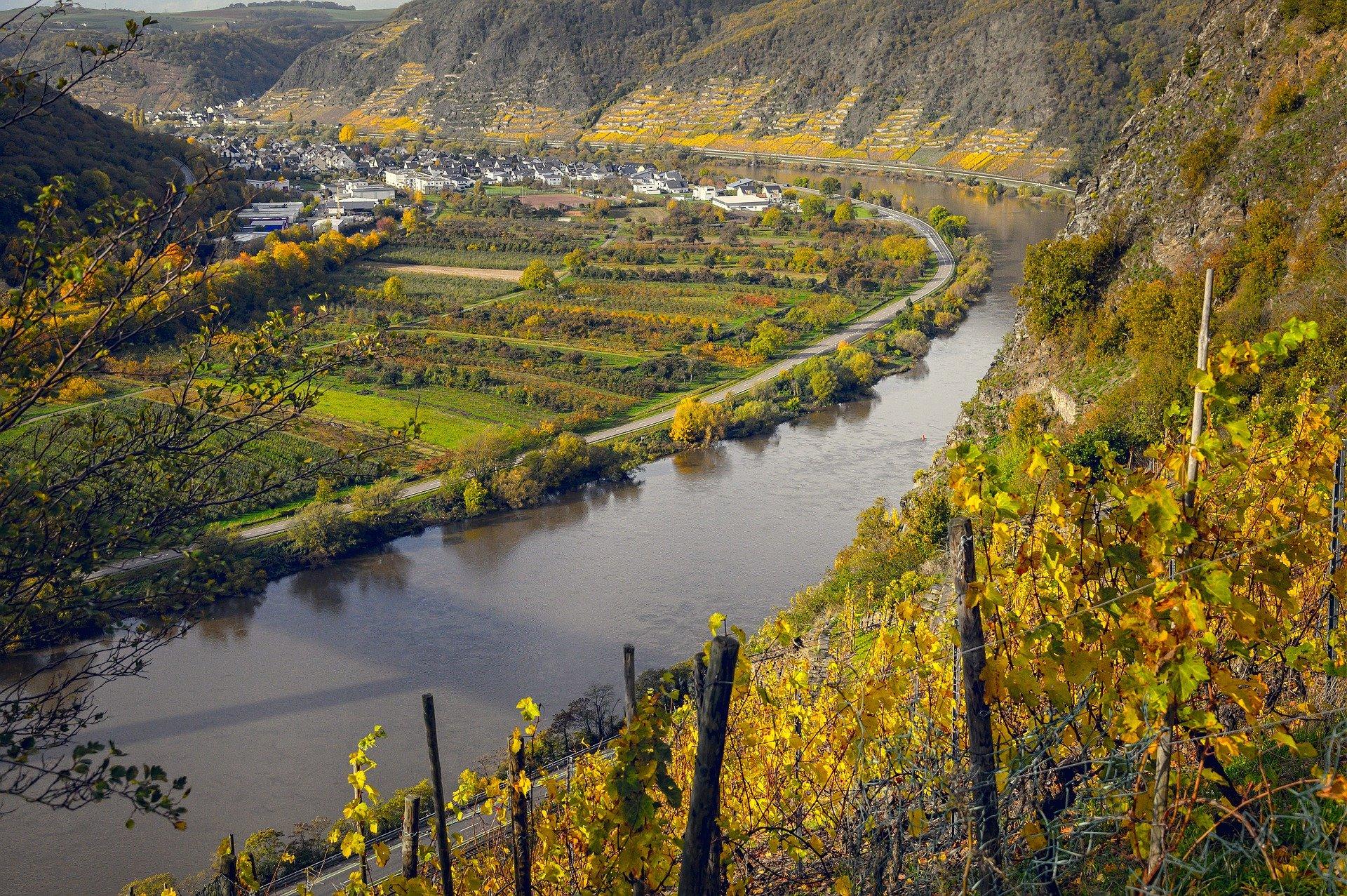 Mosel, una de las zonas productoras de Riesling
