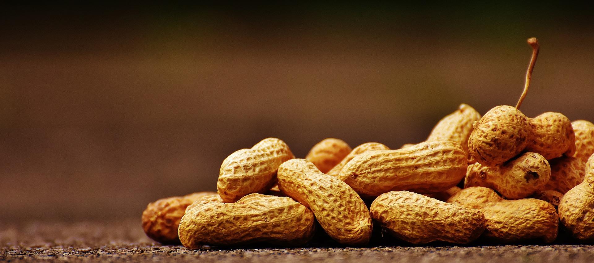 Los frutos secos son proteína vegetal de primer orden